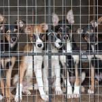 Fundraising Ideas for Animals, Pets & Shelters